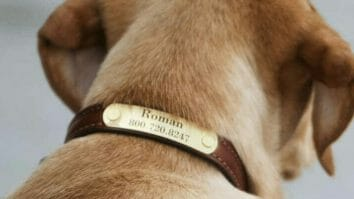 Best Leather Dog Collars with Nameplate