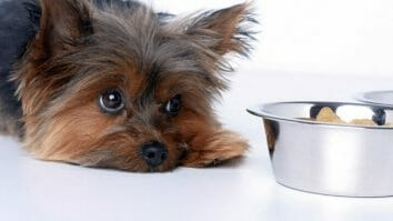 How Many Days Can Dogs Go Without Food